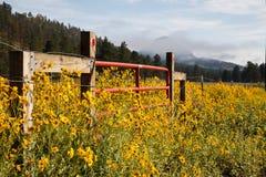 从科罗拉多落矶山的风景场面 库存图片