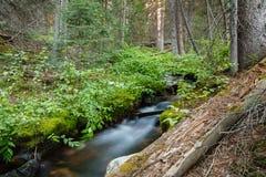 从科罗拉多落矶山的风景场面 跑Throush的小河Laramie山的一个森林 免版税库存图片