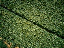 从空气的向日葵领域 免版税图库摄影