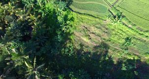从空气的看法横跨对米的村庄路和椰子树在巴厘岛海岛上调遣  影视素材