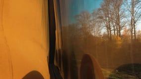 从窗口的公共汽车视图在行动森林夏天 大公共汽车沿森林公路移动 游览车在涂柏油去 股票录像
