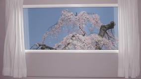 从窗口的看法在背景蓝天的开花的佐仓树 背景板材,色度关键录影背景 股票录像