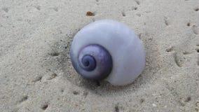 从紫色海洋蜗牛的紫色壳在日出期间的沙子海滩在酸值苏梅岛海岛,泰国上 免版税库存照片
