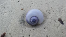 从紫色海洋蜗牛的紫色壳在日出期间的沙子海滩在酸值苏梅岛海岛,泰国上 库存图片