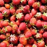 从红色成熟草莓的背景结果实顶视图特写镜头 免版税图库摄影