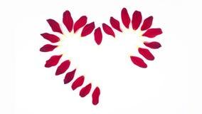 从红色花瓣慢动作的心脏形状 股票录像