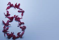 从红色花的3月8日在浅兰的背景 看板卡开花问候 背景例证安排您文本的向量 免版税库存图片
