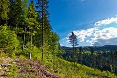 从线索的视图到从Beskidy山的Pilsko峰顶 免版税库存图片