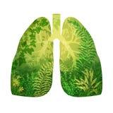 从绿色森林的支气管 免版税库存图片
