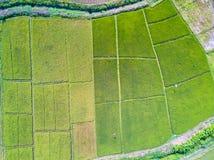 从绿色米飞行寄生虫的空中顶视图照片在有稻增长的植物的乡下土地调遣  库存照片