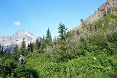 从老森林火灾的再生物在冰川国家公园 免版税库存图片