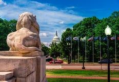 从联合驻地的看法在对美国国会大厦大厦的哥伦布圈子在华盛顿D C - 在前面的大狮子雕塑 免版税库存照片