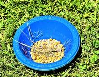 从胡麻植物的亚麻籽蒴蓝色碗的 免版税库存图片