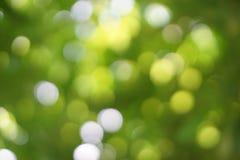 从自然光的Bokeh在树下 库存照片
