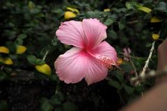 从自然的花使您感到新鲜 免版税库存照片