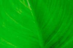 从自然绿色背景的条纹图形 免版税库存图片