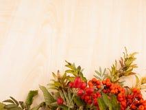 从花楸浆果和狂放的野玫瑰果的秋天背景 库存图片