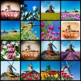 从荷兰的风车和郁金香花 免版税图库摄影