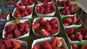 从莓果种植园的新鲜的草莓被卖在有机食品商店,市场 股票录像