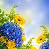 从蓝色八仙花属的花束 库存图片