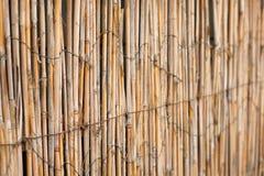 从藤茎的篱芭有光的从后面 库存图片