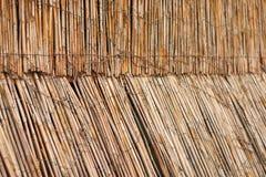 从藤茎的篱芭有光的从后面 免版税库存照片