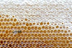 从蜂蜂房的蜂窝用在一个充分的框架视图的金黄蜂蜜填装了 木背景详细资料老纹理的视窗 免版税库存图片