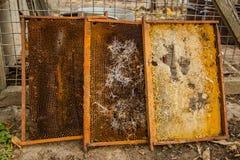 从蜂蜜蜂蜂房的被拣掉的老巢框架与大蜡螟隧道和带子 免版税库存照片