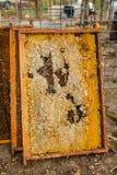 从蜂蜜蜂蜂房的被拣掉的老巢框架与大蜡螟隧道和带子 免版税库存图片