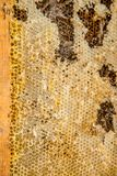 从蜂蜜蜂蜂房的被拣掉的老巢框架与大蜡螟隧道和带子 库存照片