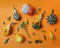 从装饰南瓜的秋天样式 免版税库存图片