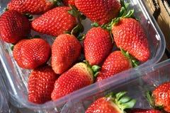 从西班牙进口的草莓 库存图片