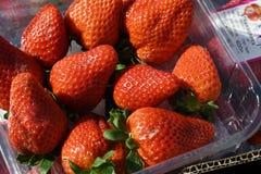 从西班牙进口的草莓 免版税库存照片