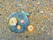 从贝壳的沙子 库存图片