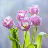 从郁金香桃红色丁香颜色的花束 免版税库存图片