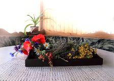 从野草莓花和莓果的静物画  图库摄影