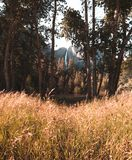 从金黄秋天草的领域看见的优胜美地瀑布 免版税库存图片