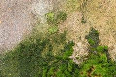 从铺磁砖的墙壁的织地不很细背景有湿气踪影的以绿色霉菌和绿色青苔的形式 绘 免版税库存图片