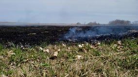 从闷燃的草原的烟在大草原火规定的烧伤以后 影视素材