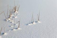 从雪的草 库存图片