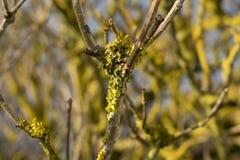 从青苔的一棵黄色树 在关闭 库存图片