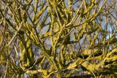 从青苔的一棵黄色树 库存照片