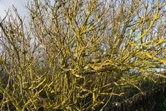 从青苔的一棵黄色树 免版税库存图片