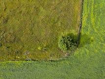 从飞行寄生虫的全景到与肮脏的足迹和绿色灌木的农业领域 顶视图 图库摄影