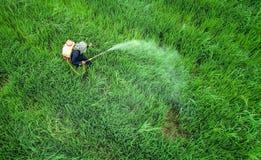 从飞行寄生虫的鸟瞰图 泰国农夫喷洒的化学制品 库存照片