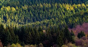 从飞行的森林在秋天 库存照片
