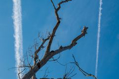 从飞行的飞机的小条 一棵老树的干燥分支 库存照片