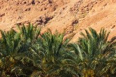 从马萨达的看法沙漠的在一好日子 免版税图库摄影