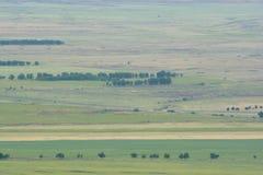 从高度拍的照片 域绿色结构树 自然 库存图片