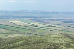 从高度拍的照片 域绿色结构树 自然 免版税库存照片